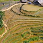 Rice terraced fields in Sapa, Vietnam — Stock Photo