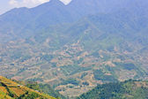 Mountain view of rice terraced field — Stock Photo