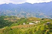 Teraslı pirinç tarlaları peyzaj — Stok fotoğraf