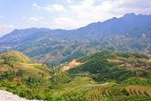 Scenic of mountain rice terraced fields, Vietnam — Stock Photo