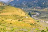 Rice terraced field, Vietnam — Stock Photo