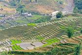 Sapa rice terraces, Vietnam — Stock Photo