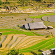 Rice terraced fields in Ta Van village, Vietnam — Stock Photo