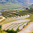 Saprice terraced fields, Vietnam — Stock Photo #13806820