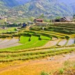 Saprice terraced fields, Vietnam — Stock Photo #13808678
