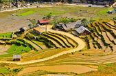 та ван деревни риса террасные поля, вьетнам — Стоковое фото