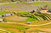 Rice terraced fields, Vietnam — Stock Photo
