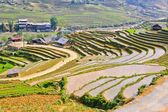 Sapa rice terraced fields in Hmong minority village, Vietnam — Stock Photo