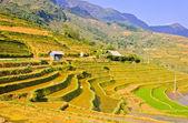 Paisagem de campos de arroz de sapa — Foto Stock