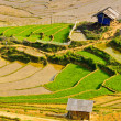 Stock Photo: Hill tribe rice terraced fields
