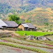 Stock Photo: Hill tribe of rice crops