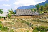 Vista rurale delle colture di riso — Foto Stock