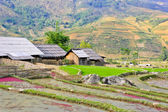 Hill tribe of rice crops — Stock Photo