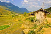 Barn in hill tribe rice crops in Sapa, Vietnam — Stock Photo