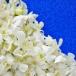 White orchid decorative — Stock Photo