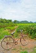 Oude fiets — Stockfoto