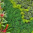 Vertical garden wall — Stock Photo #16821783