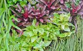 Vertical garden wall — Stock Photo