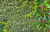 Parede jardim vertical — Fotografia Stock