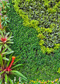 Vertical garden wall — Stock Photo