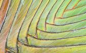 Palm Petiole pattern — Stock Photo