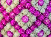 Bellissimo fiore decorativo — Foto Stock