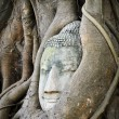 Head of Buddha in a tree trunk — Stock Photo