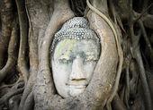 Head of Buddha in a tree trunk — Stock Photo