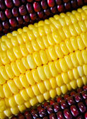 Rode en gele maïs — Stockfoto