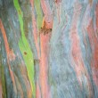 Extraordinary colored bark — Stock Photo