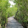 Foto de Stock  : Mangrove reforestation in Thailand
