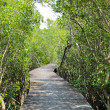 Stock Photo: Mangrove reforestation in Thailand