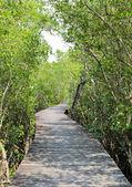 Reforestación de manglar en tailandia — Foto de Stock