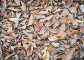 地面に乾燥した葉 — ストック写真