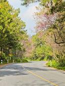 Cerisiers en fleurs le long de la route — Photo