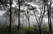 Dipterocarp forest — Stock Photo