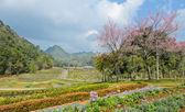 Beautiful garden scence — Stock Photo