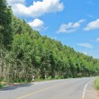 Stock Photo: Green road