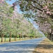Beautiful floral road  — Stock Photo