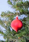 Christmas red ball — Stock Photo