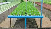 Fattoria idroponica verdure — Foto Stock