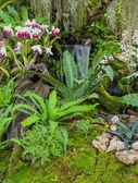 Decoração de jardim de orquídeas — Fotografia Stock