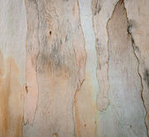 Bark texture background — Stock Photo