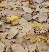 Dried leaves — Foto de Stock