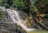 Evergreen forest waterfall — Stock Photo