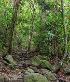 Hiking trail through rainforest, Thailand — Stock Photo