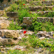 Stock Photo: Klatschmohn vor Mauer - corn poppy before wall 07