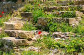 Klatschmohn vor Mauer - corn poppy before the wall 07 — Stock Photo