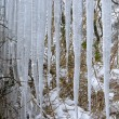 Stock Photo: Icicle 03