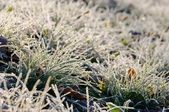 Wiese mit Raureif - meadow and hoarfrost 02 — Stock Photo